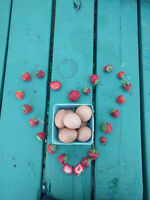 Eggs from Hens on Pasture for sale !!!!