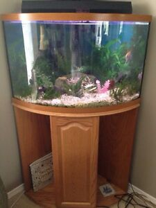 Custom FISH TANK with Stand