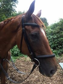 17hh horse to share