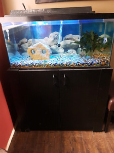 35 gal fish tank everything included