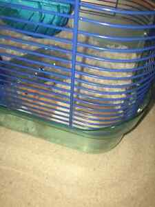 Syrian Hamster with all Nessesities Kitchener / Waterloo Kitchener Area image 4