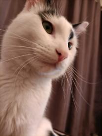 Lovely kitten male