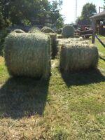 Hay first cut