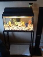 10 gallon fish tank/ stand and accesories