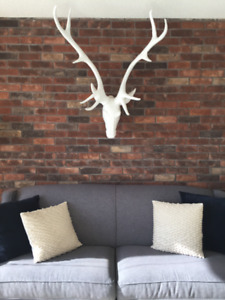 Stag Head for Sale - Yep, You Read Right!