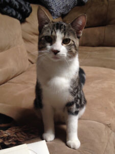 Male kitten looking for home