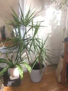 PLANT SALE ~ big and small ~ cheap!! PT. 2
