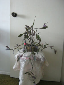 Plants:Purple Hearts, Aloe Vera,Spider Plants,flowery pen holder