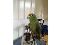 Parrot , large macaw cage