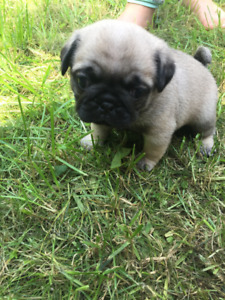 Adopt Dogs & Puppies Locally in Mission | Pets | Kijiji