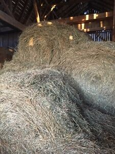 4x4 soft core horse hay round bales for sale