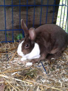 Free Rescued Bunny