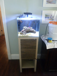 Fluval 13 gallon marine set up - fish and rock included