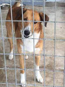 Sonny (real name Dakota) is a 3 year old Smooth Coat Collie.