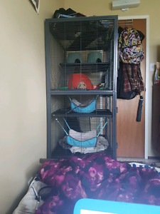 Pet friendly apartment needed!