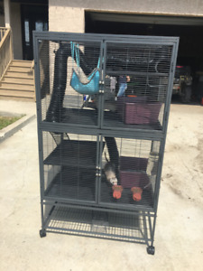 Two Ferrets And Cage.