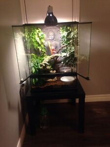 Geckos (female and male) with terrarium and stand
