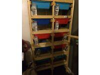 rodent rack