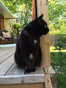 Lost black cat - Lakeport and Linwell