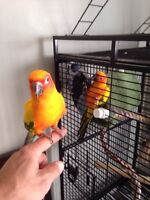 Male and female parrots