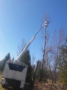 Tree Removal AJL Tree Service