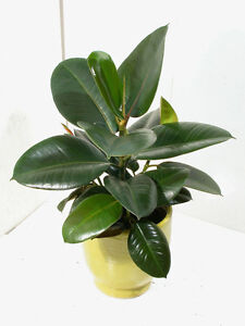 Exotic Houseplants for Sale