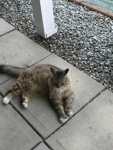 Lost Cat - 137 Mt Fosthall Dr