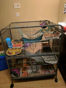 Rats, cage, food and accessories