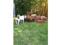 13 terracotta garden plant pots, planters