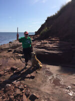 House and Pet Sitting  in Prince Edward Island