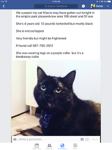 Missing cat in empire park pleasentview area
