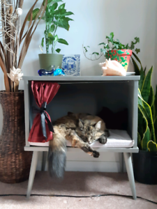 Cat or small dog home