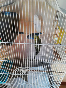 Budgies with cage and supplies