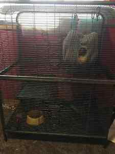 2  ferret, cage and other things