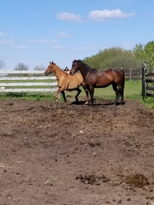 Outdoor Horse Board Available