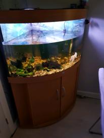 Juwel 190 l corner fish tank