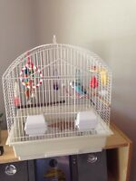 Blue Male Budgie and Cage