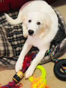 Cute White Puppy For Rehoming.