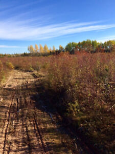 Vacant Land 10 acres... 50 acres available