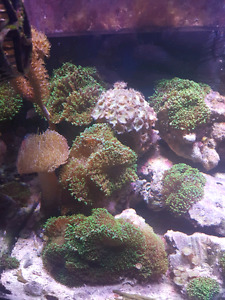 salt water corals and fish