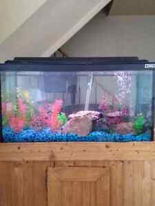 Need help with a fish tank! Or sell whats here!