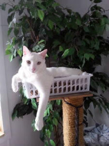 White cat or kitten wanted!