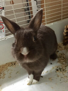 (FREE) Bunny just looking for a loving home!