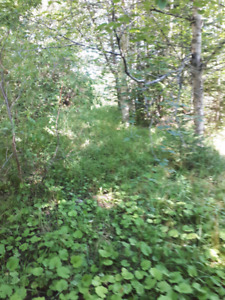 Land for sale on Cabot trail