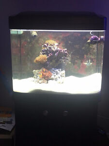 Oceanic Biocube 29 gallon with factory stand (Saltwater)
