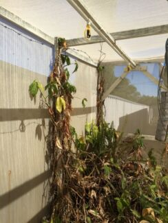 Large Shadehouse   now  ***  REDUCED **** Yokine Stirling Area Preview