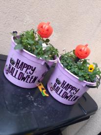 Halloween Themed Planters