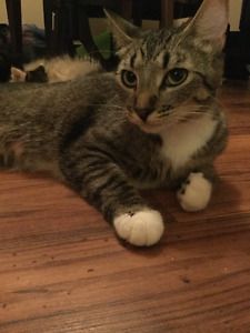One year old feamale cat for sale