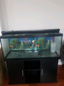 Fish tank - 75 gallon tank with stand & filter