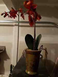 Artificial Orchid Flower vase London Ontario image 1